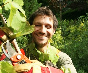 jardinier vigneron qui taille des vigne